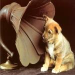 Ouvidos Para Ouvir